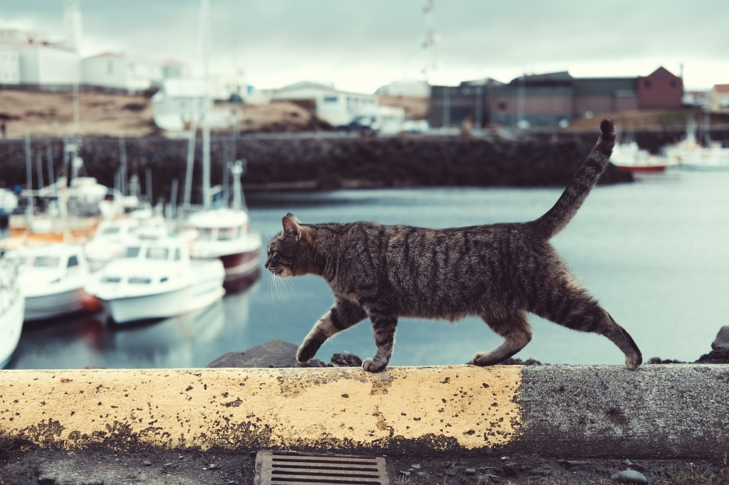 Photo of a cat walking along a port microfiction prompt sonya's three line tales, flash fiction