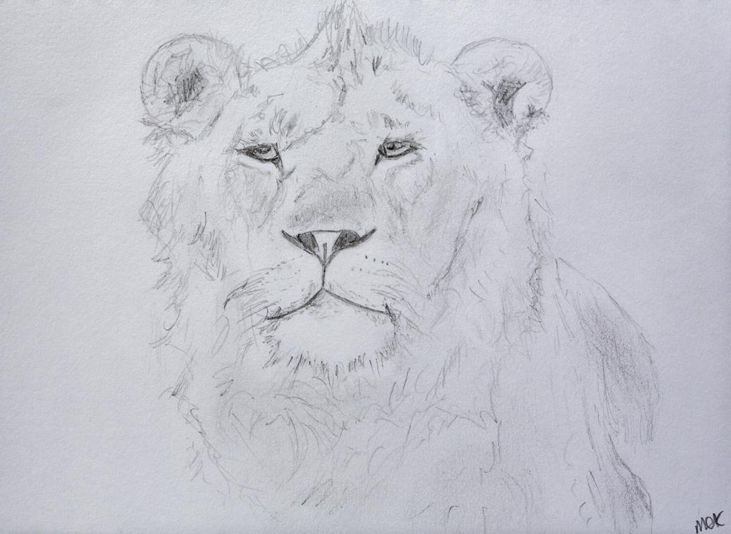 Black and white sketch of a lioness, illustrating a story of courage in returning to a work in progress